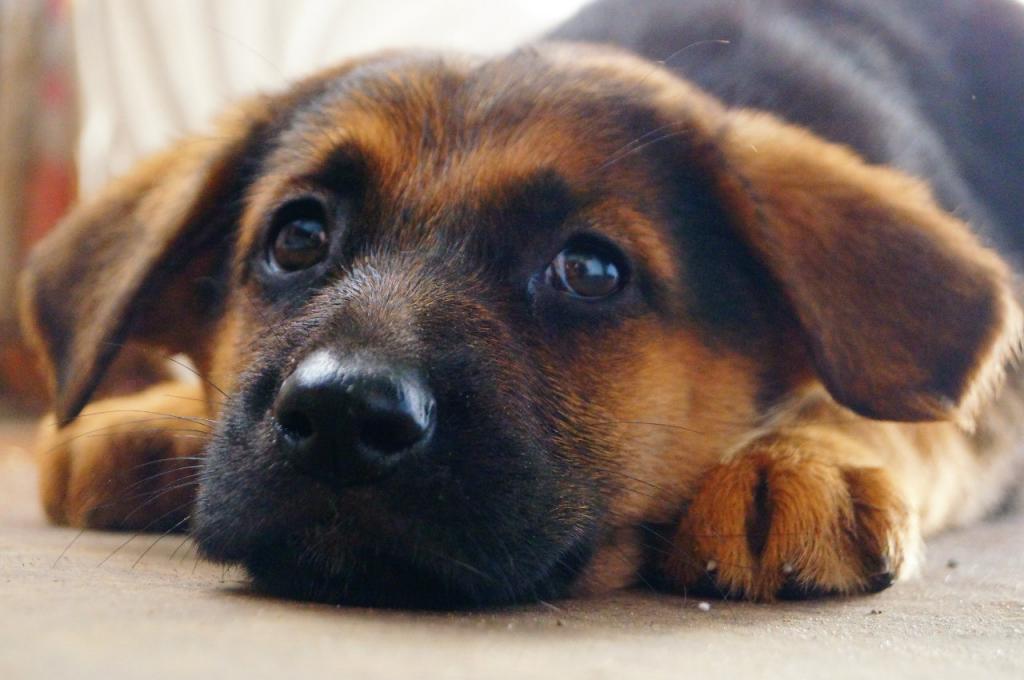 Под Днепром мужчина повесил щенка. Новости Днепра