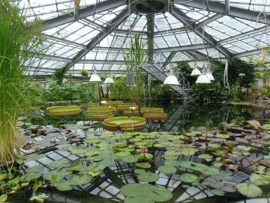 Ботанический сад Днепра