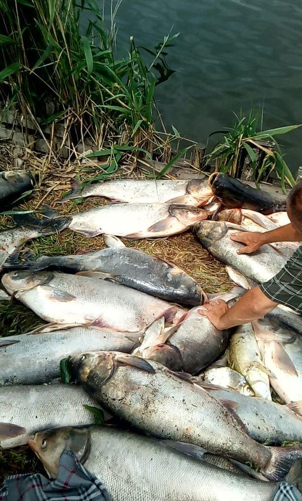 водохранилище рыба мор Апостолово