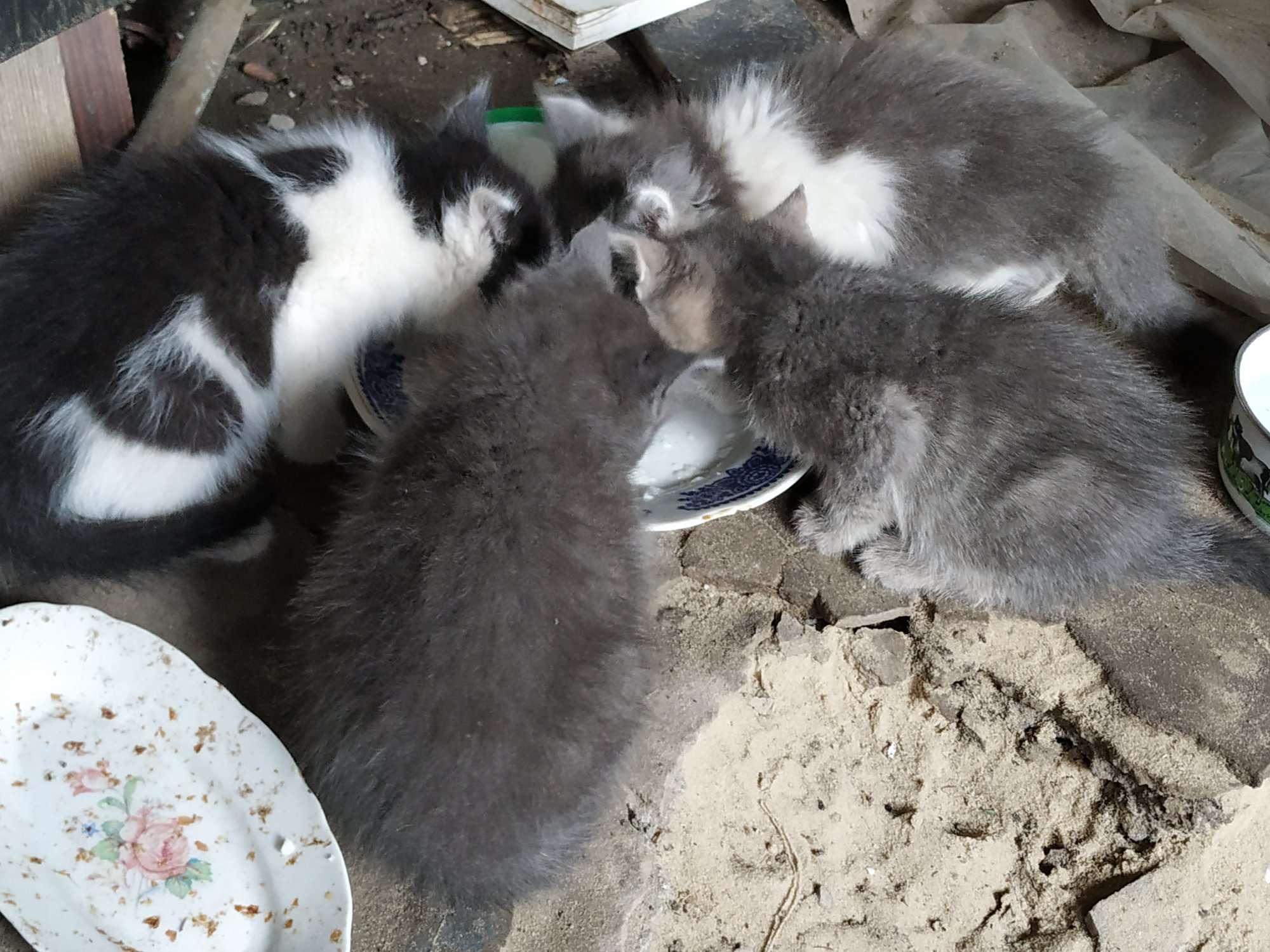 В Днепре 4 котят ищут новые дома. Новости Днепра
