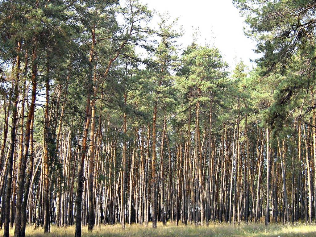 леса запрет пожарная опасность