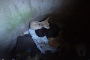 Как спасали щенков. Новости Днепра