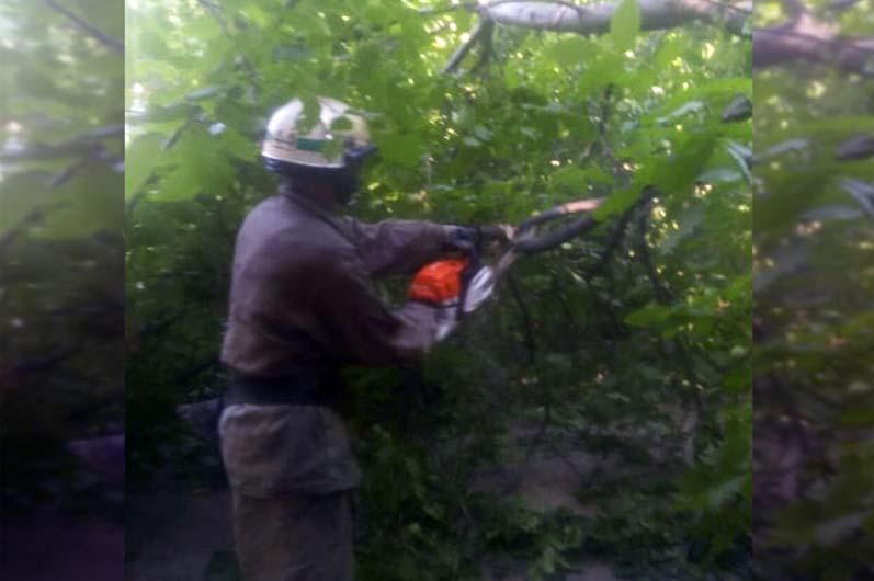 Чрезвычайники убрали дерево с проезжей части. Новости Днепра
