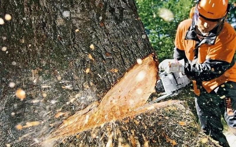 В парке имени Лазаря Глобы в Днепре сейчас производится удаление аварийных, больных и фаутных деревьев. Новости Днепра