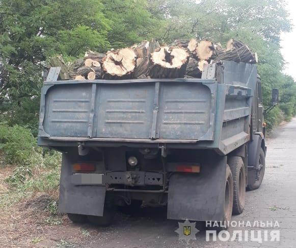 Незаконная вырубка древесины акации. Новости Днепра