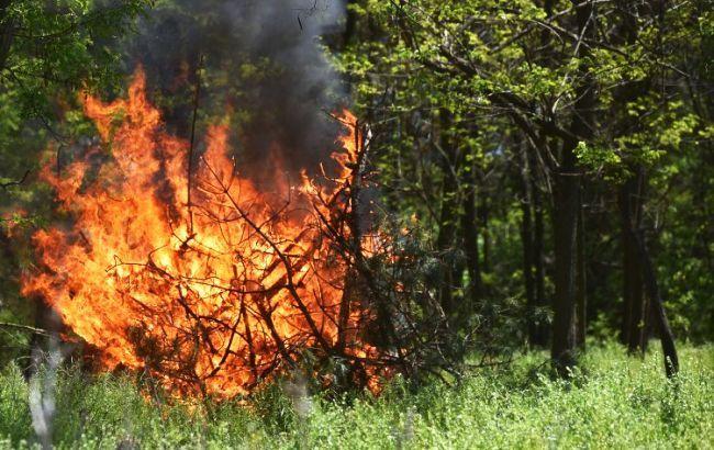 Есть угроза возникновения пожаров в лесах и на открытых территориях. Новости Днепра
