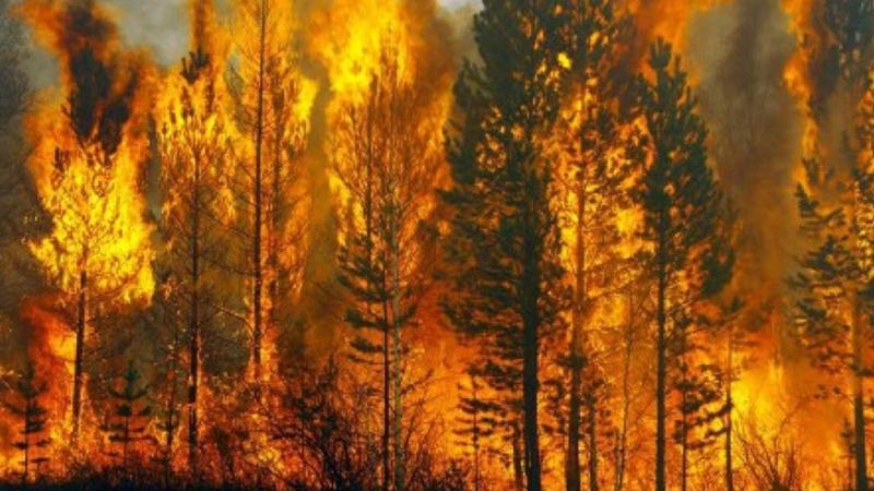 На территории региона ожидается высокая пожарная опасность. Новости Днепра
