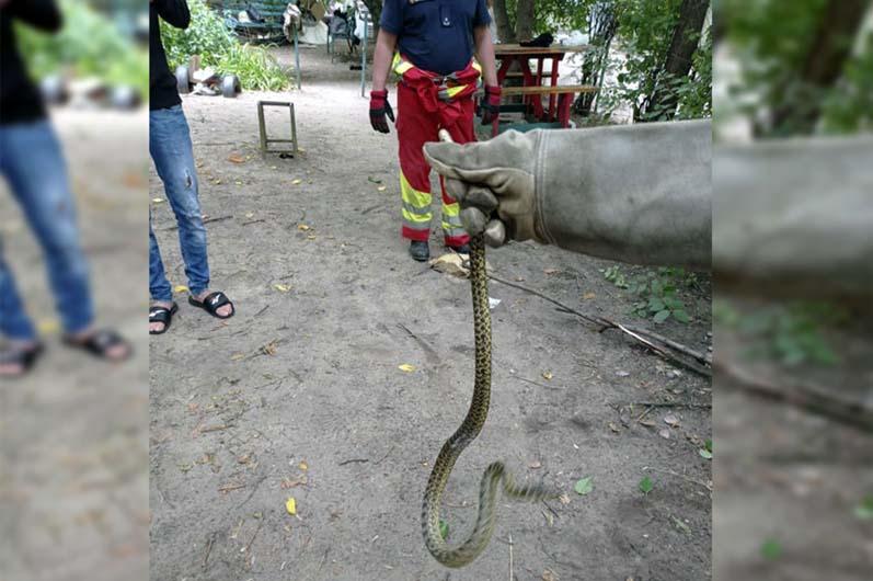 Змея могла навредить детям. Новости Днепра