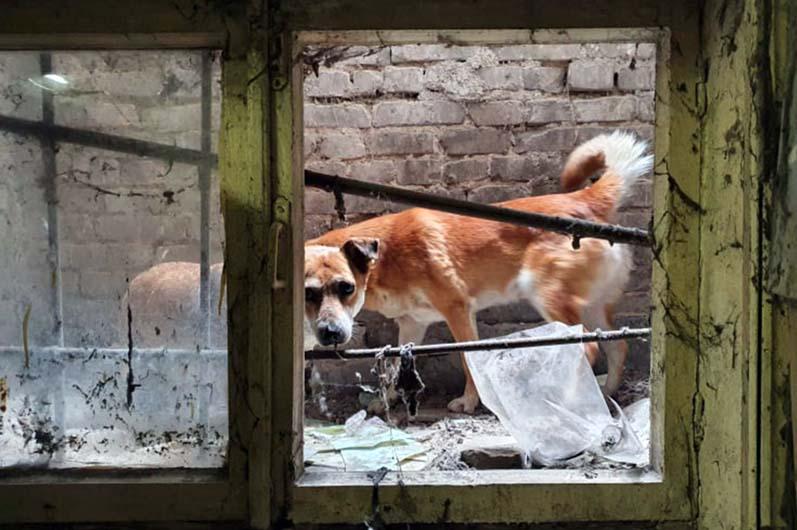 Спасли собак. Новости Днепра