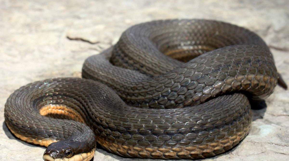 Военнослужащий не заметил змию и она его укусила. Новости Днепра