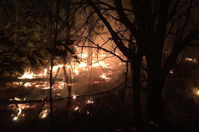 Более 20 спасателей тушили 8 гектар леса. Новости Днепра