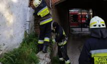 В Днепре птенец упал в трубу водосточную трубу