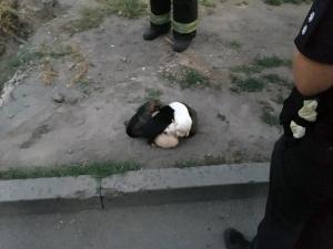 Новости Днепра про Упали в яму: в Днепре спасли щенков