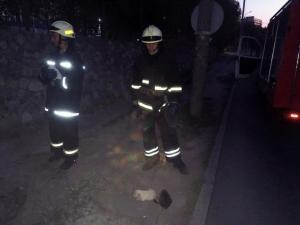 Щенки упали в яму и нуждались в помощи. Новости Днепра