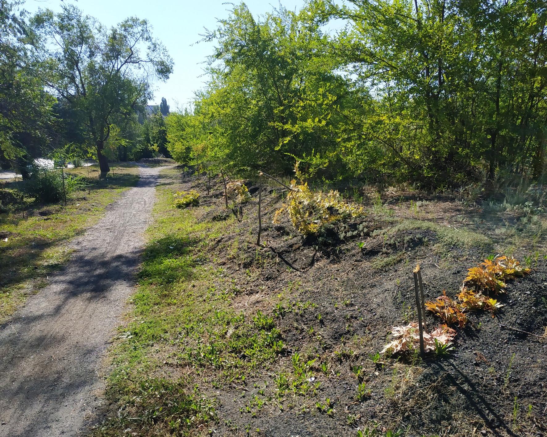 Вандалы сломали больше десятка деревьев. Новости Днепра