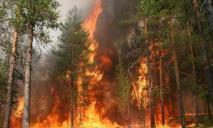 В области могут начать массово гореть леса: названа причина