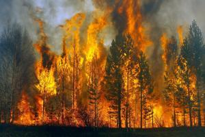 Существует вероятность возникновения пожаров в лесах и на открытых территориях. Новости Днепра