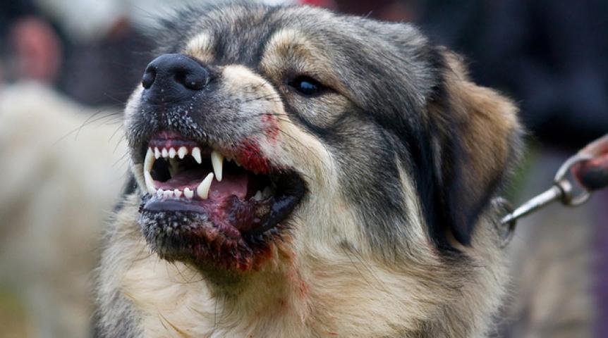 В Днепропетровской области возникла вспышка бешенства животных. Новости Днепра