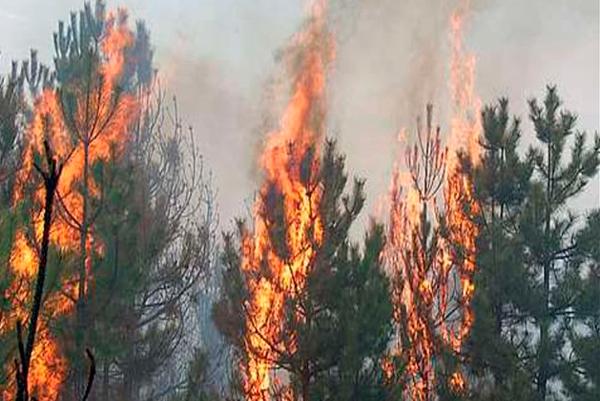 Из-за жары и ветра могут возникать пожары в лесах и на открытых территориях. Новости Днепра