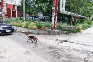 Новости Днепра про В Днепре собака провалилась в глубокий люк, ее спасли