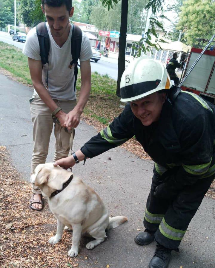 Собака упала в заброшенный коллектор. Новости Днепра