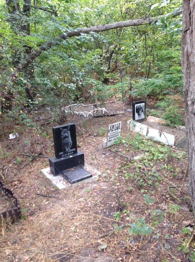 Новости Днепра про «Почти по Стивену Кингу»: где в Днепре находятся стихийные кладбища домашних животных