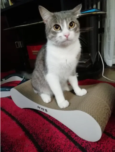 Новости Днепра про «Кот напрокат»: каких животных днепряне сдают в аренду для проведения фотосессий