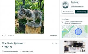 Новости Днепра про «Золотые питомцы»: ТОП-5 дорогих собак и кошек с OLX