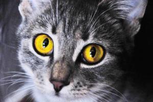 Новости Днепра про В Днепре кот мог умереть от голода в люке