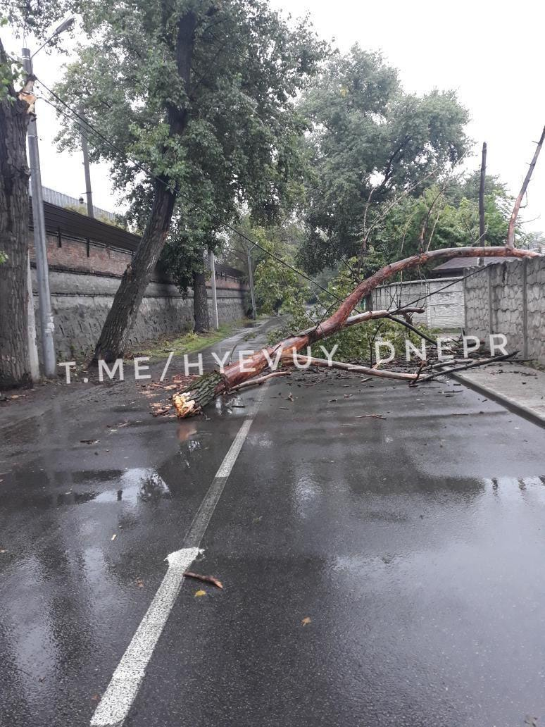 Новости Днепра про Сильный ветер в Днепре: на дорогу обрушились деревья, оборваны кабеля
