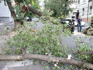 Дерево лежит посреди дороги, движение перекрыто, провода и кабеля оборваны. Новости Днепра