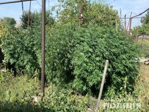 У мужчины дома нашли большое количество наркотиков. Новости Днепра