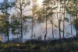 Выгорело 5.5 гектаров. Новости Днепра