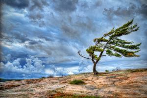 Днепрян предупреждают об опасности, прогнозируется сильный ветер. Новости Днепра