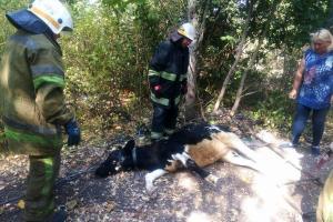 Новости Днепра про Как спасали теленка, который провалился в колодец, опубликованы фото