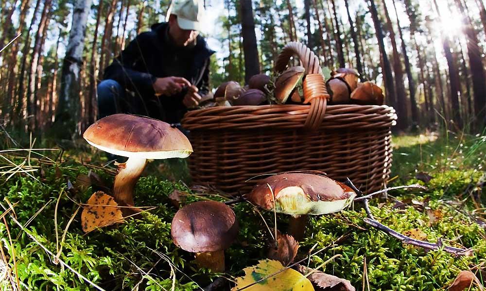 Как собирать грибы и не отравиться. Новости Днепра