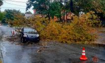 В Днепре во время движения на автомобиль упало дерево