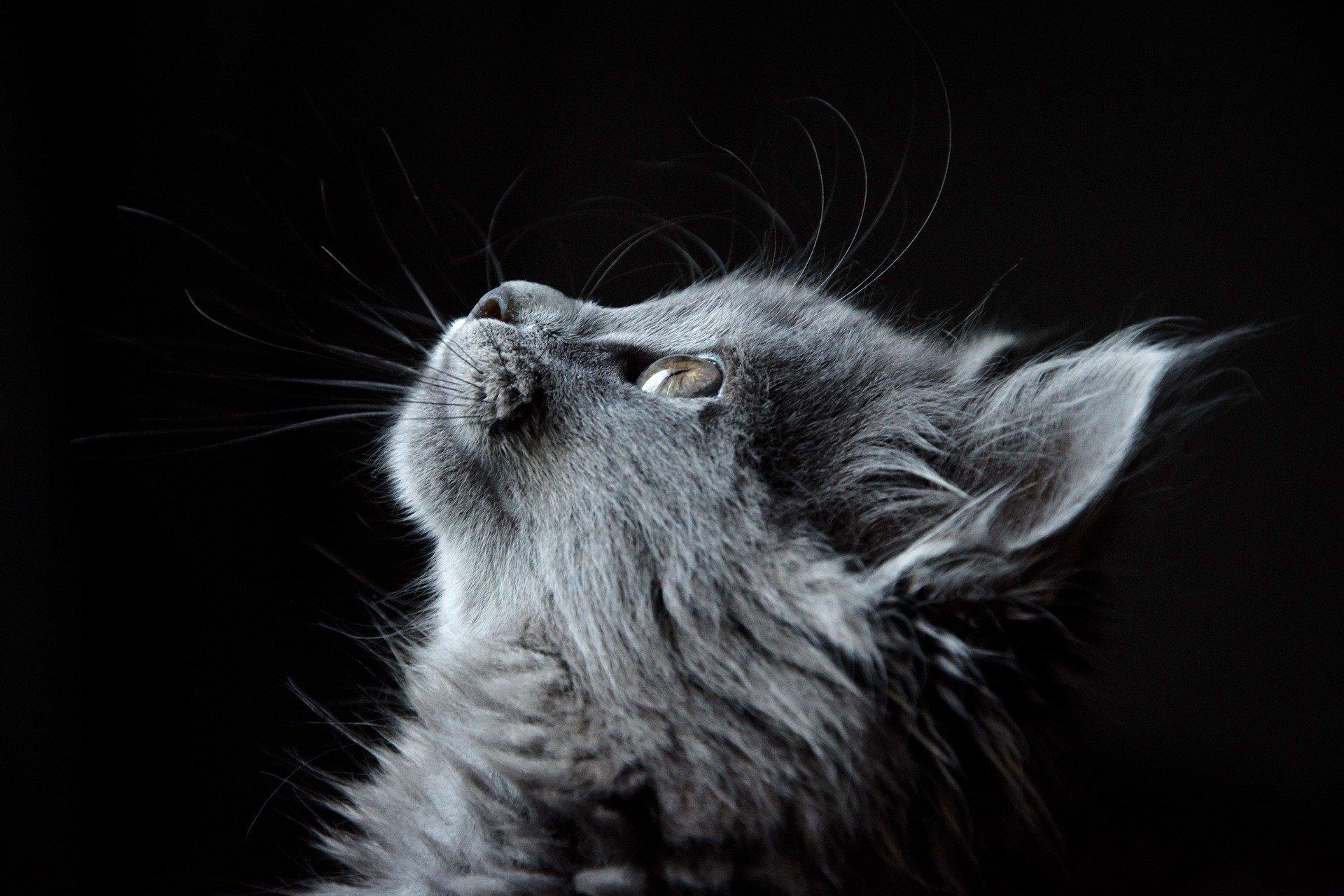 Выбросил кота из окна