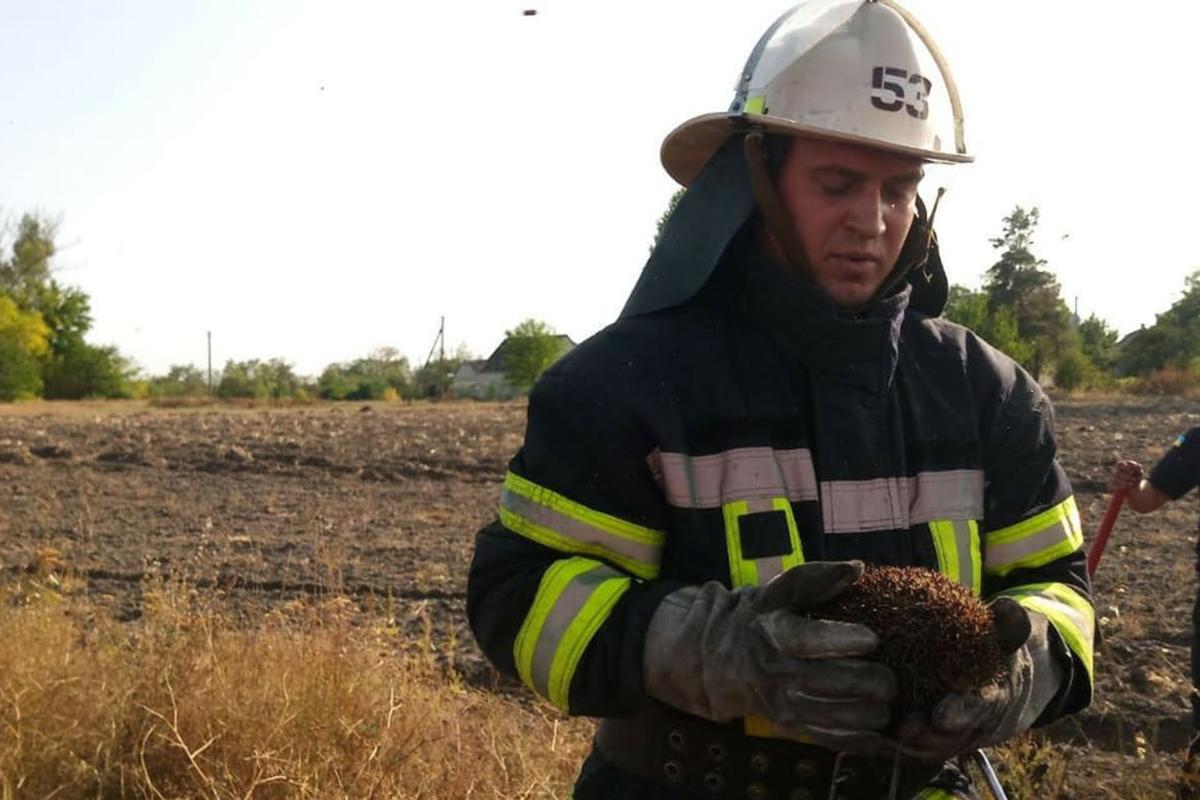 На Днепропетровщине от огня спасли животное. Новости Днепра