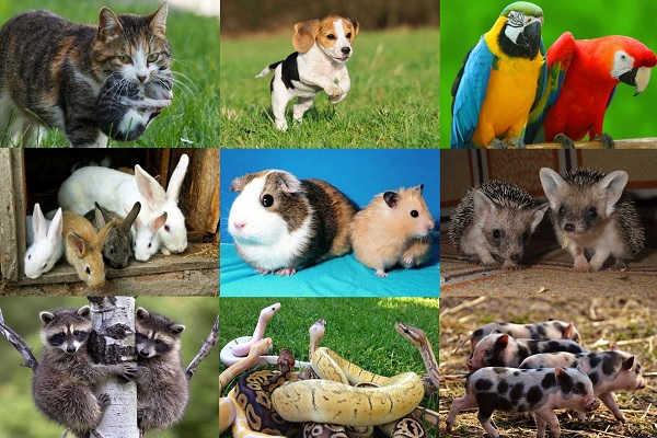 В Украине хотят ввести налог на животных. Новости Днепра
