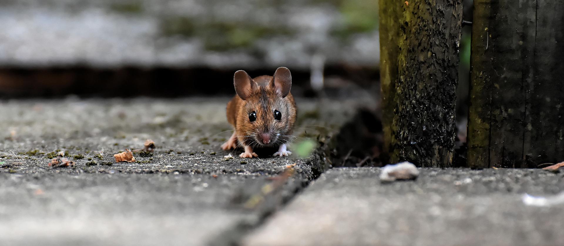 Девушка обнаружила мертвую мышь в пачке макарон