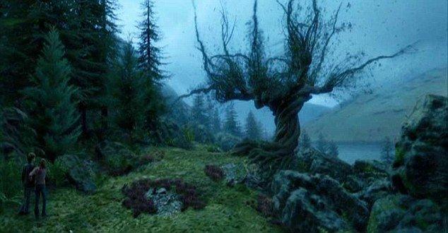 Деревья в Днепре