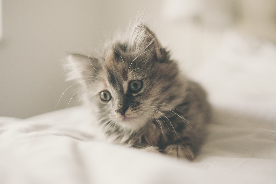Малолетний живодер забил камнями котенка. Новости Днепра