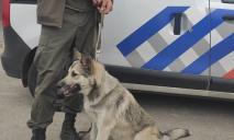 Агрессивная днепрянка напала на девушку и отобрала собаку
