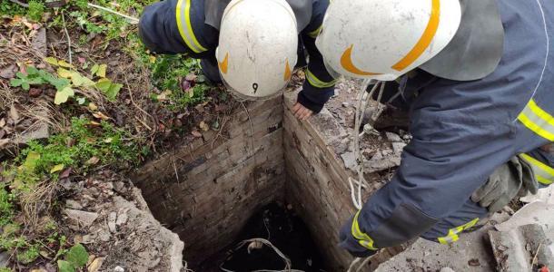 Под Днепром спасли корову, которая провалилась в яму