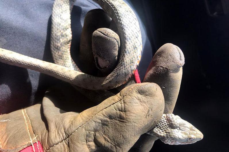 Словили змею. Новости Днепра