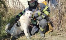 Под Днепром собака упала в колодец: на помощь пришли спасатели