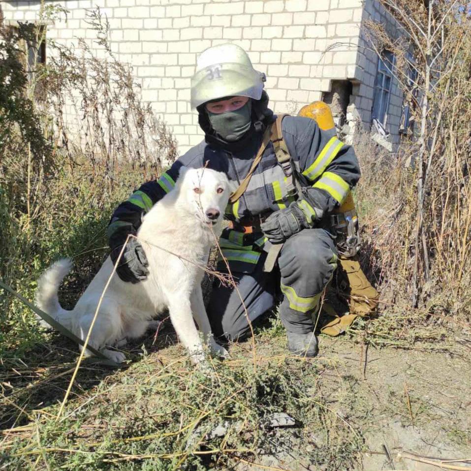 Собака упала в колодец. Новости Днепра