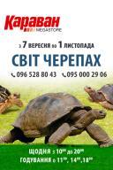 В ТРЦ «Караван» проходит выставка «Мир черепах»
