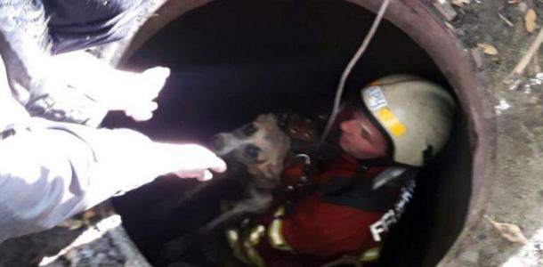 В Днепре спасли собак, которые провалились в люк